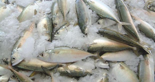 400 أسرة من الضمان الاجتماعي تستفيد من مبادرة توزيع الأسماك بلوى