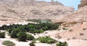 دوريات بيئية مشتركة لحماية مفردات الحياة الفطرية بمحافظة ظفار