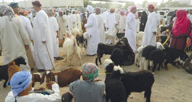 تفاوت أسعار الأغنام والأبقار في هبطة الـ 27 بولايتي جعلان بني بوحسن وبوعلي