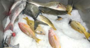 الساجواني يصدر قرارا بتنظيم صادرات السلطنة من الأسماك وتحديد أنواعها