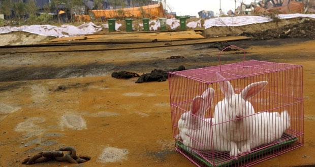 الصين: 54 مفقودا بعد انفجارات (تيانجين) وحصيلة الوفيات تقفز لـ121 حالة