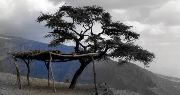 """""""راشيل ماكيفر"""" تصدر كتاب مصورا بعنوان """"عمان .. ليست كلها أبيض وأسود"""""""