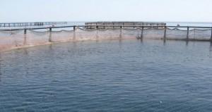 تقرير..توظيف الموارد الطبيعية بكفاءة لزيادة الإنتاج السمكي