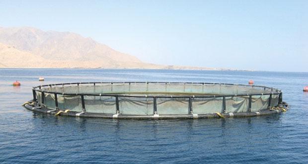 استخدام نظم المعلومات الجغرافية في اختيار مواقع الاستزراع السمكي بمسندم
