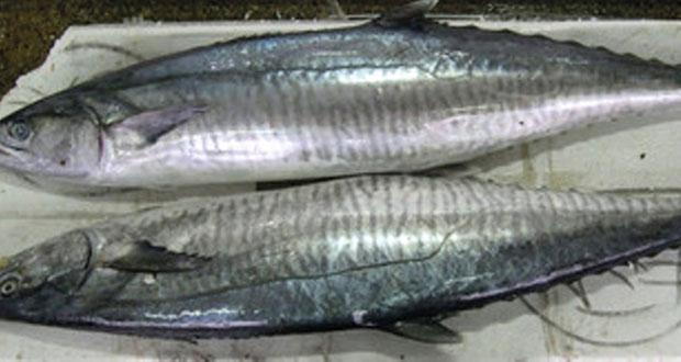 بدء سريان حظر صيد أسماك الكنعد في سواحل السلطنة