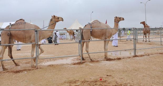 انطلاق فعاليات مهرجان خريف ظفار للمزاينة والمحالبة الرابع 12 اغسطس الجاري