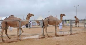 اليوم .. انطلاق مهرجان خريف ظفار الرابع للمزاينة والمحالبة بولاية صلالة
