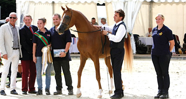 الخيالة السلطانية تفوز بثلاث ميداليات ذهبية وبميداليتين فضية وبرونزية