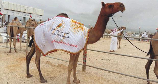تألق فعاليات مهرجان خريف ظفار الرابع للمزاينة والمحالبة بحضور جماهيري غفير