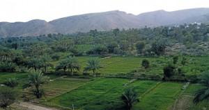 """""""حيل الغاف"""".. قرية زراعية بمقومات سياحية ومركز تجاري لتسويق منتجاتها"""