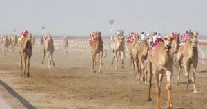 المضمر عبدالله بن طويرش جاهز لمنافسات موسم سباقات الهجن وعينه على بطولة كأس الخليج بالفليج