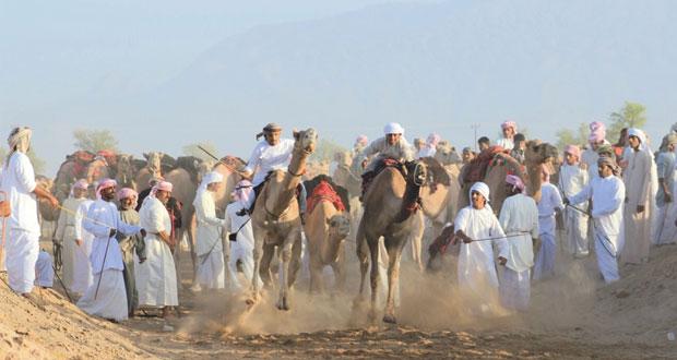 300 ناقة في سباق ركض العرضة يوم ثالث عيد الأضحى بالكامل والوافي