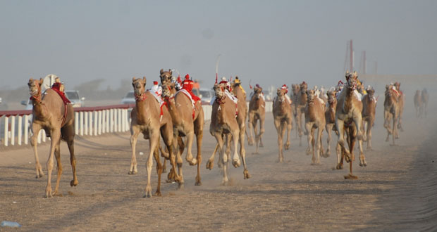 ميدان الأبيض بالمضيبي يشهد اختتام فعاليات السباق الأول للمهرجان السنوي لسباقات الهجن الأهلية