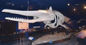 """""""متحف التاريخ الطبيعي"""" روعة التباين في معالم البيئة العُمانية"""