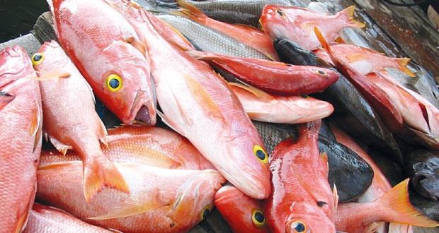 أكثر من 211 ألف طن إجمالي الإنتاج السمكي بالسلطنة العام الماضي