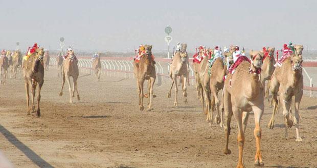 غدا .. الاتحاد العماني لسباقات الهجن يدشن موسم سباقاته الجديد بولاية هيماء بمحافظة الوسطى