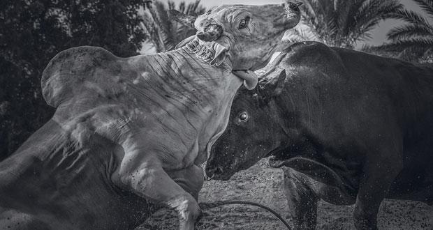"""""""77″ صورة تلون المعرض السنوي الثاني والعشرين لجمعية التصوير الضوئي"""