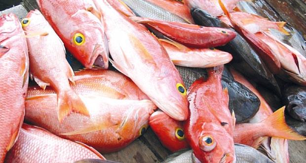 141.6 ألف طن كمية الأسماك المنزلة بالصيد الحرفي بالسلطنة حتى أغسطس الماضي