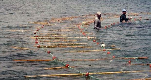 """مصائد الأسماك تنتعش بجزيرة """"قرقنة"""" التونسية"""