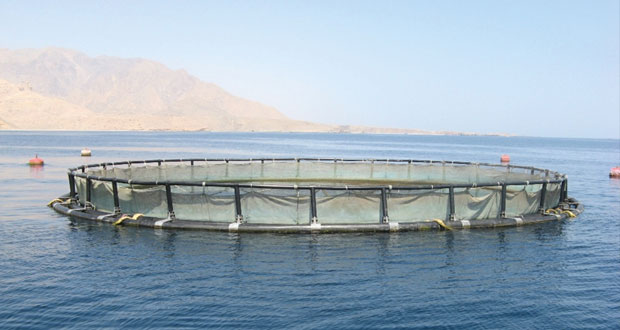 برئاسة السلطنة.. تواصل ندوة لجنة الاستزراع السمكي بمنظمة (الريكوفي)