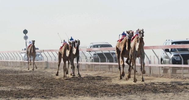انطلاقة رائعة ومثيرة للبطولة الخليجية الرابعة لسباقات الهجن بميدان الفليج بولاية بركاء