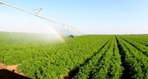 (الزراعة والثروة السمكية) تعمل على تشجيع الاستثمار وتقديم التسهيلات للقطاع الخاص والمنتجين الراغبين في إقامة مشاريع تنموية