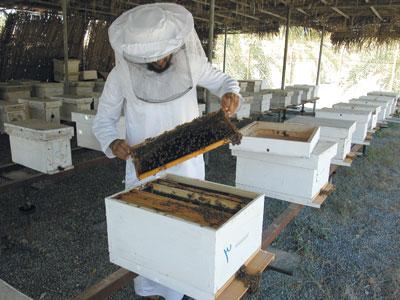 اليوم.. بدء فعاليات سوق العسل العماني الخامس