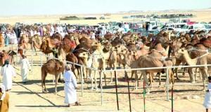 اليوم .. انطلاق فعاليات المهرجان السنوي السادس عشر لمزاينة الإبل بسيح الطيبات بولاية صحم