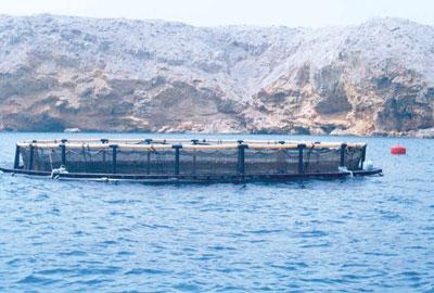 """رسالة علمية حول """"تطوير البنية التحتية وقاعدة بيانات التسويق لمواقع أقفاص الاستزراع السمكي باستخدام نظم المعلومات الجغرافية"""""""