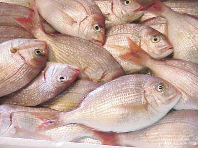 أكثر من مليونين ونصف المليون ريال عماني مبيعات سوق الجملة للأسماك في 2015