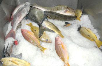 204 آلاف طن إجمالي الصيد الحرفي بالسلطنة بنهاية نوفمبر الماضي
