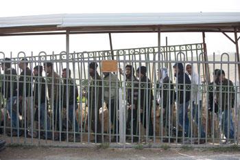 إسرائيل تواصل جرائمها في الأراضي المحتلة