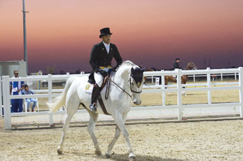 الخيالة السلطانية تخطف الفئات الثلاث في ثالث مسابقات أدب الخيل بالرحبة