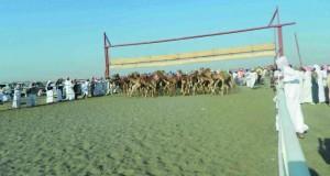 تواصل المنافسة في مهرجان التميز السادس للهجن بولاية القابل