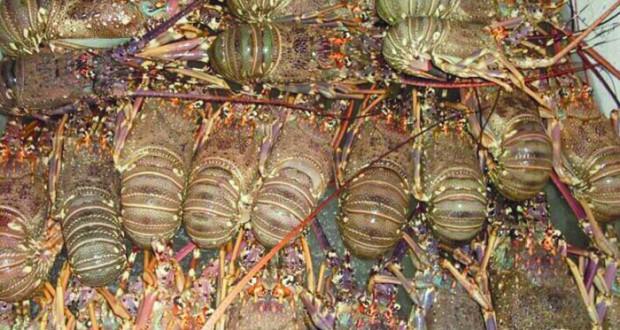 «الزراعة والثروة السمكية» تدعو الصيادين إلى الالتزام بقانون الصيد البحري وحماية الثروة المائية الحية