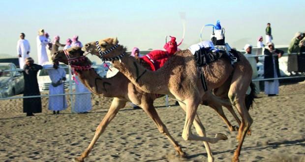 20 سيارة و10 أشواط لمهرجان البكرة (هرمز) المملوكة للهجانة السلطانية الفائزة بكأس الحول ببطولة كأس الخليج الرابعة للهجن