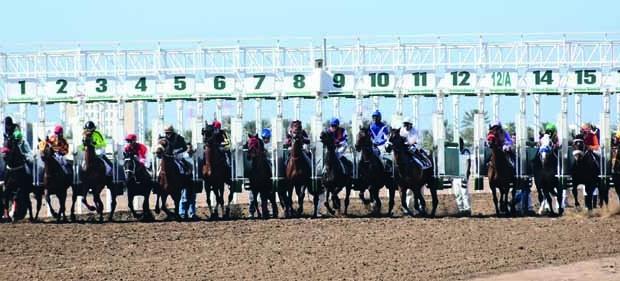 تنافس وإثارة تشهدها فعاليات السباق الخامس عشر بمشاركة واسعة من ملاك الخيل