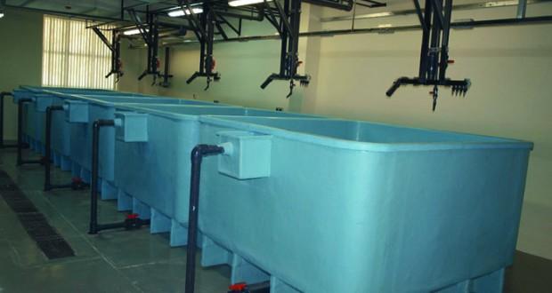 مركز الاستزراع السمكي يواصل تطوير نشاط الاستزراع بالسلطنة