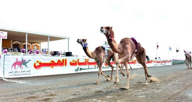 اختتام ناجح لمنافسات السباق السنوي للهجن بميدان صحار