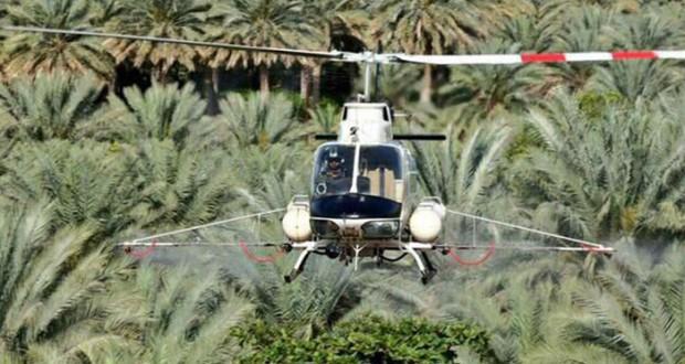 تنفيذ أعمال الرش الجوي لمكافحة حشرة دوباس النخيل بولايات محافظة الظاهرة
