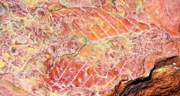 الكشف عن موقع جديد للأشجار المتحجرة في ولاية دماء والطائيين
