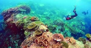 الاحتباس الحراري يقتل الشعاب المرجانية فى شمال ووسط الحيد المرجاني العظيم