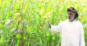 الأرض والزراعة في عُمان من خلال كتاب المصنّف