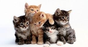 القطط أكثـر الحيوانات المنزلية المفضلة للألمان