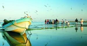 قرار بتنظيم صادرات السلطنة من الأسماك وتحديد أنواعها