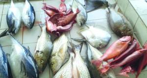 غدا بدء تطبيق قرار تنظيم صادرات السلطنة من الأسماك