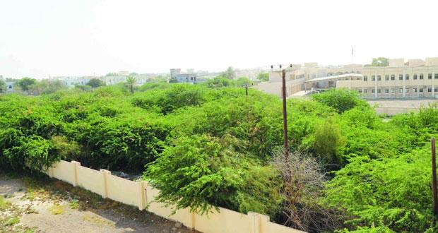 غداً.. تدشين الحملة الوطنية لإزالة أشجار (المسكيت)