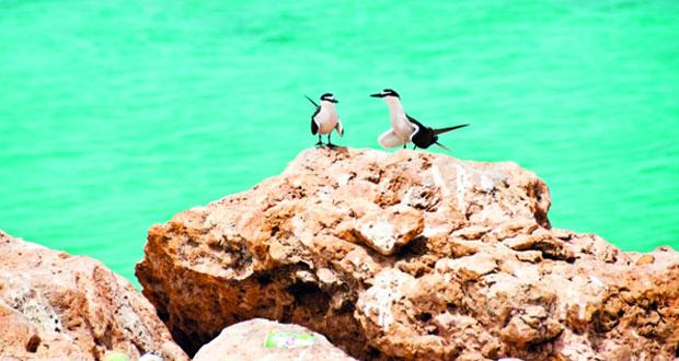 البيئة والشئون المناخية توقف التخييم فـي محمية جزر الديمانيات الطبيعية حتى نهاية أكتوبر القادم