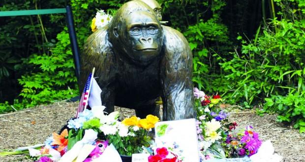 زوار حديقة الحيوان في سينسيناتي يلقون اكاليل الزهور حول تمثال من البرونز لغوريلا