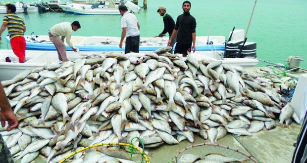 43.5 مليون ريال عماني قيمة الأسماك المنزلة بالصيد الحرفي بنهاية فبراير الماضي